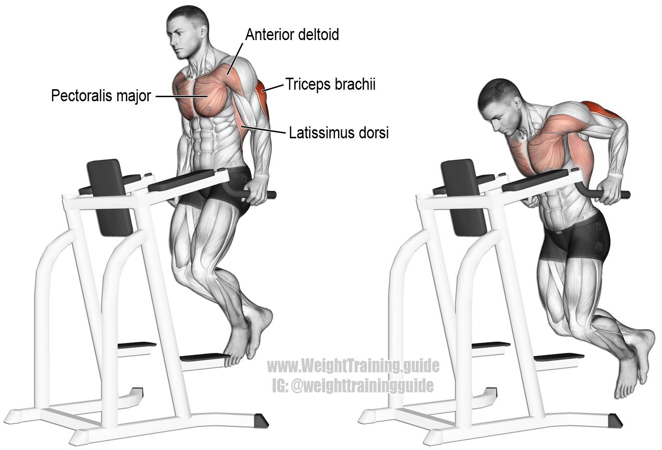 Triceps-Dip-2.png